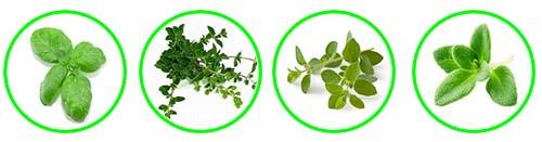 przyprawy zielone